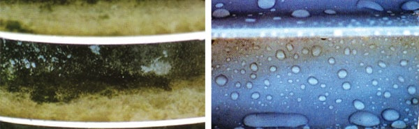 Mold growth before removal. Hydrophobicity of cleaned surface restored. 发霉的绝缘子称为霉菌家园的时侯如何应对 发霉的绝缘子称为霉菌家园的时侯如何应对 Pic176