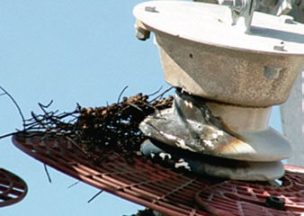 Figure 10: Barrier type WPD compromised by bird nest. arrester Wildlife Protective Devices for Arresters Fig101