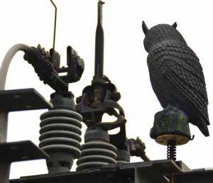 塑料猫头鹰只是用于威慑, 使啮齿动 物远离诸如Glenmore等变电站。 配电站安装保护装置减少野生动物引发的停电 配电站安装保护装置减少野生动物引发的停电 Topic 5 Nov10