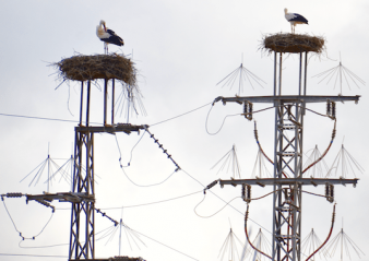 bird streamer Birds: More Threat to Lines or Threatened by Lines? Birds More Threat to Lines 338x239   Birds More Threat to Lines 338x239