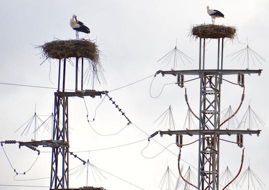 bird streamer Birds: More Threat to Lines or Threatened by Lines? Birds More Threat to Lines
