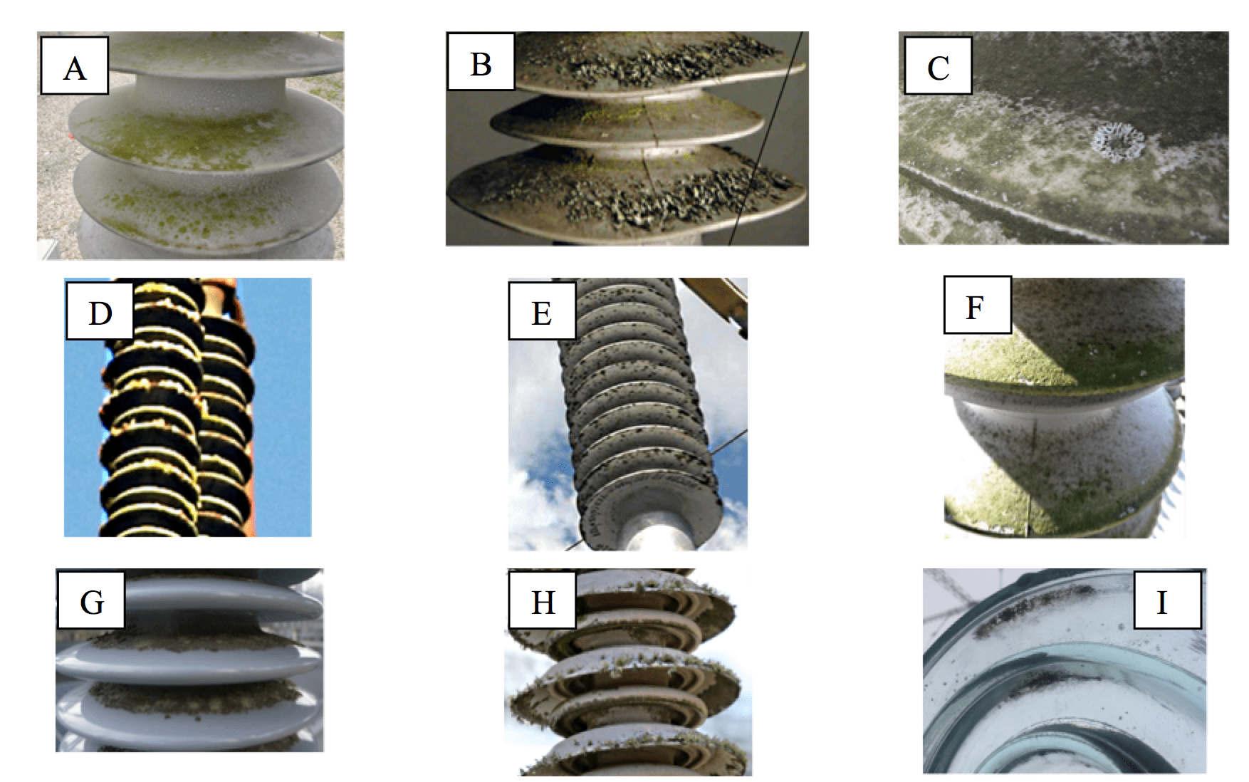 composite insulator Biological Growths on Composite Insulators HV insulators