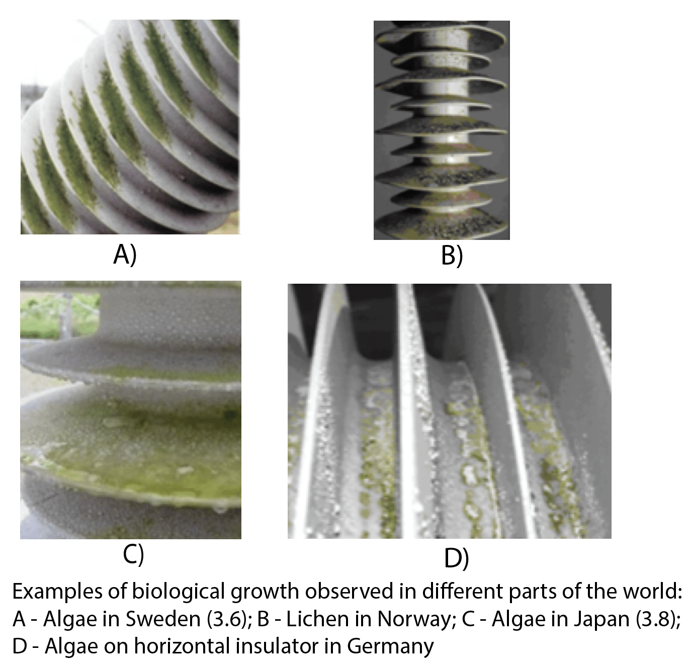 composite insulator Biological Growths on Composite Insulators insulators hv