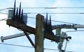 Distribution conductor/insulator sleeve (center phase). distribution systems,pollution & wildlife, porcelain, insulators,insulator, power, distribution, contamination Resolving Problems on Distribution Systems from Pollution & Wildlife Topic 1 July 20 distribu