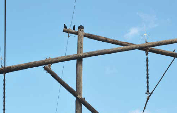 Example of bird 'discourager' used on transmission structure. distribution systems,pollution & wildlife, porcelain, insulators,insulator, power, distribution, contamination Resolving Problems on Distribution Systems from Pollution & Wildlife Screen Shot 2016 05 20 at 9