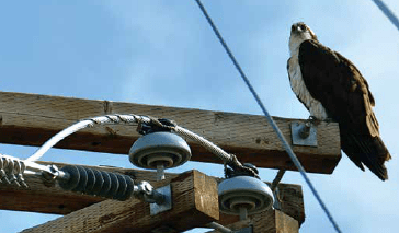 Lines with vertically installed pin insulators are especially dangerous to birds since the conductor sits on top of the insulator, not below as in suspension string. distribution systems,pollution & wildlife, porcelain, insulators,insulator, power, distribution, contamination Resolving Problems on Distribution Systems from Pollution & Wildlife Screen Shot 2016 05 20 at 9