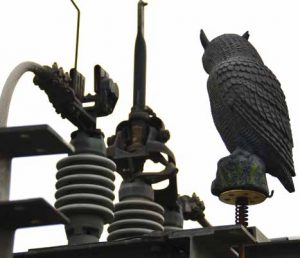 Plastic owls such as this used to be only deterrent used to keep rodents away from substations such as Glenmore. substation Protective Devices Installed to Reduce Wildlife Outages at Distribution Substation Topic 5 Nov10 300x258