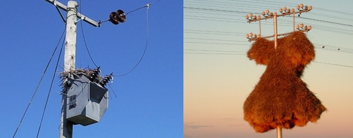 Pole top transformer nest site and huge structure in South Africa. wildlife Protecting Overhead Lines & Substations from Wildlife Induced Outages tpc2 00004