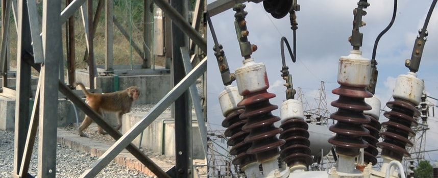 Monkeys enter substation in India and evidence of inter-phase bridging in Greece. wildlife Protecting Overhead Lines & Substations from Wildlife Induced Outages tpc2 00007