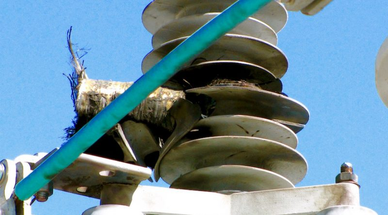 failure Failure Modes for Arresters Photo for Topic 3 Oct 24 800x445