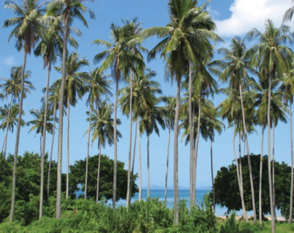 tropical paradise, yes but not for overhead distribution Tropical Paradise, Yes but Not for Overhead Distribution Thailand