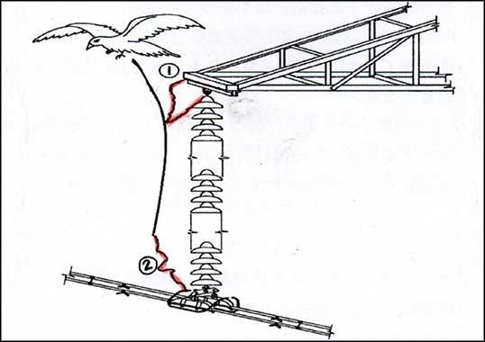 insulator Mitigating Bird Hazards to Overhead Lines Mitigating Bird Hazards to Overhead Lines