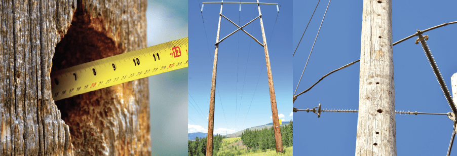 Impact of certain species of woodpecker on wood framing presents a serious asset management challenge to utilities.