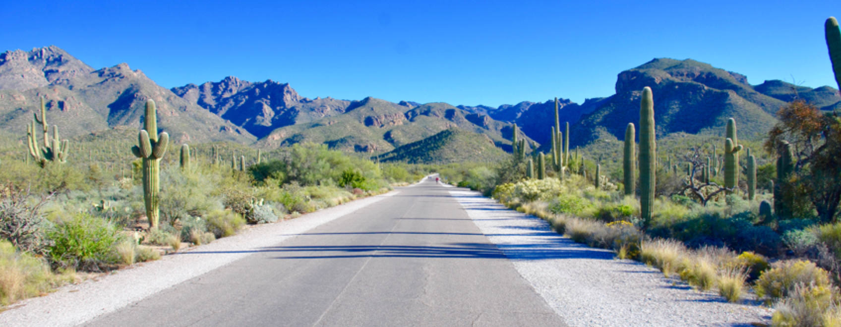 Road from the 2019 INMR WORLD CONGRESS to the Sabino Canyon 2019 INMR WORLD CONGRESS Update on the 2019 INMR WORLD CONGRESS, Oct 20-23, 2019: Westin La Paloma Tucson, Arizona This road closed to car traffic brings visitors on foot into the heart of Sabino Canyon