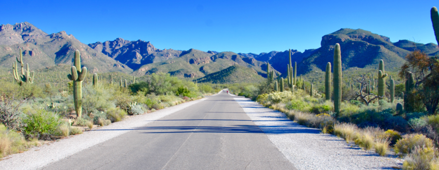 Entrance to Sabino Canyon prepares the visitor for the beauty that awaits - Discover Tucson discover tucson From Astronomy to Gastronomy: Discover Tucson at the 2019 INMR WORLD CONGRESS Entrance to Sabino Canyon prepares the visitor for the beauty that awaits